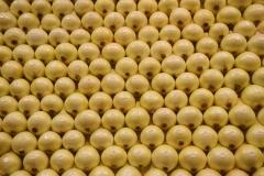 Fruit Logistica 2017 -Prezentacja nowych odmian cebuli