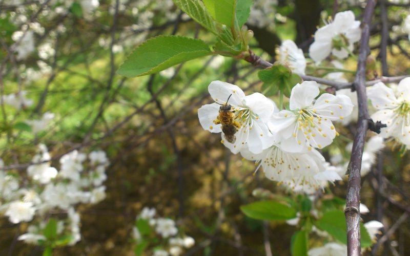 Ochrona owadów zapylających – nie tylko wiosną