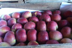 Przedłużenie zakazu importu żywności z Zachodu przez Rosję