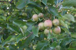 Jak embargo wpłynęło na handel polskimi owocami?