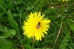Zagłada pszczół ma związek z pestycydami