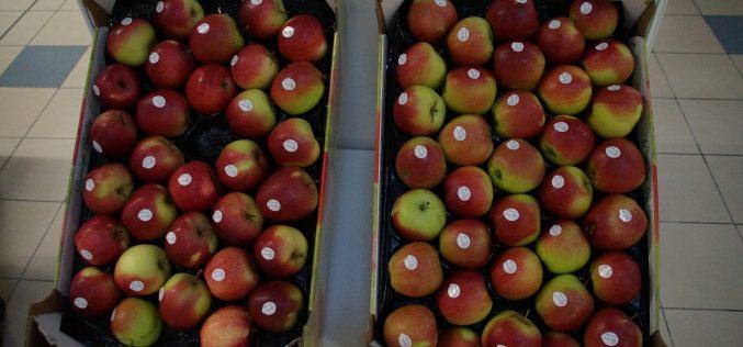 Towarzystwo Rozwoju Sadów Karłowych o trudnej sytuacji na rynku jabłek