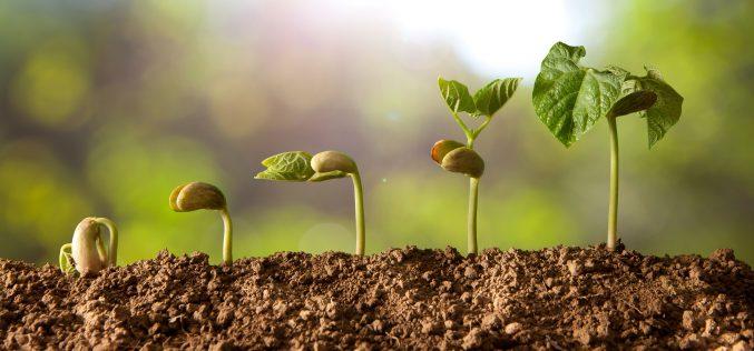 Strategia żywienia roślin ogrodniczych