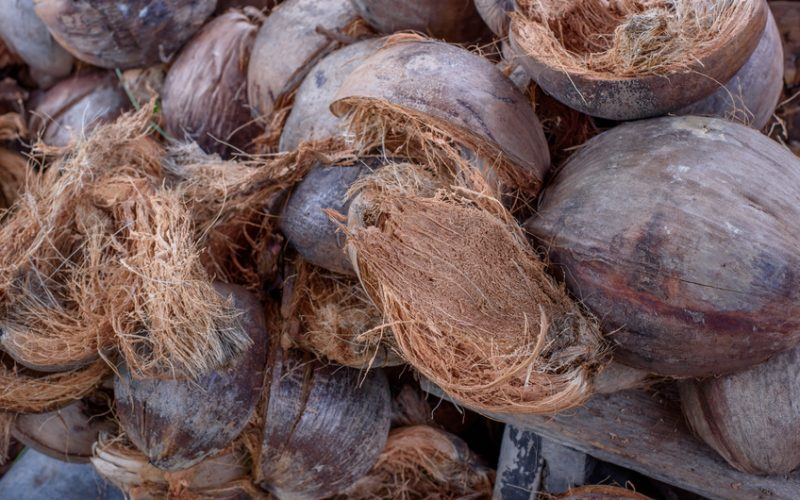 Sad pachnący czekoladą – ściółkowanie łuską kakaową