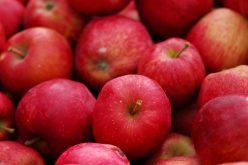 Szwedzki supermarket wycofał polskie jabłka