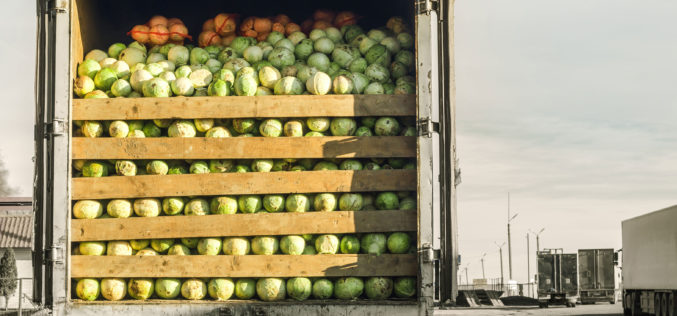 Warunki transportu świeżych owoców i warzyw