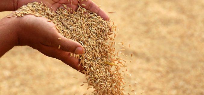 Bayer potwierdził przejęcie Monsanto za 66 mld dolarów