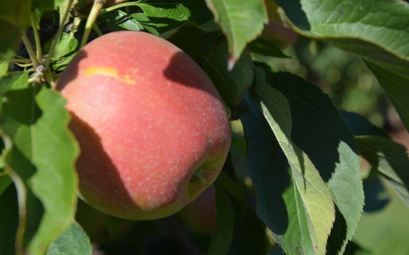 Pomoc finansowa dla producentów owoców i warzyw