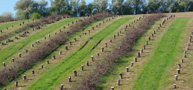 O czym należy pamiętać przy wycince drzew lub krzewów