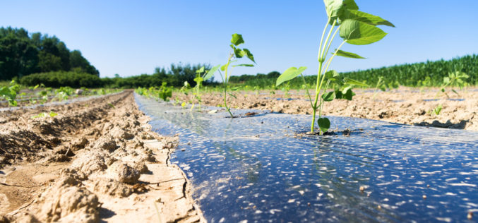 Folie biodegradowalne – alternatywą dla tradycyjnych ściółek?