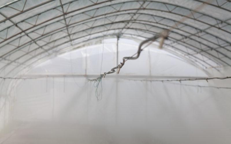 Zamgławianie ciśnieniowe stosowane w szklarniach