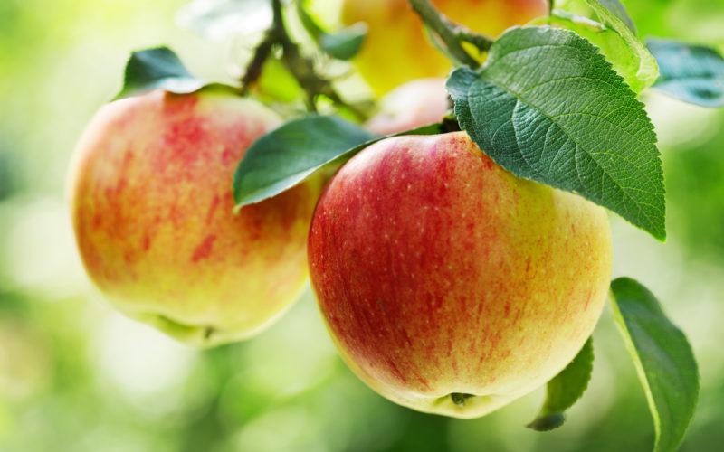 ARR wydała komunikat w sprawie wycofania owoców lub warzyw w związku z brakiem możliwości sprzedaży spowodowanym rosyjskim embargiem