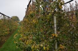 Wapnowanie gleby w sadzie – ważny zabieg jesienny