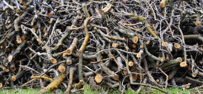 Drewno z sadów – bezużyteczny odpad czy cenny surowiec?