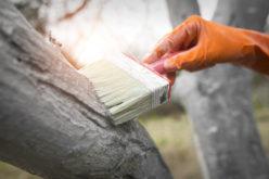 Skuteczne sposoby ochrony przed mrozem w sadzie jabłoniowym