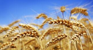 Komisje oszacowały dotychczasowe straty w rolnictwie