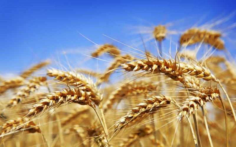 Rozpoczął się nabór wniosków o pomoc na rozwój usług rolniczych