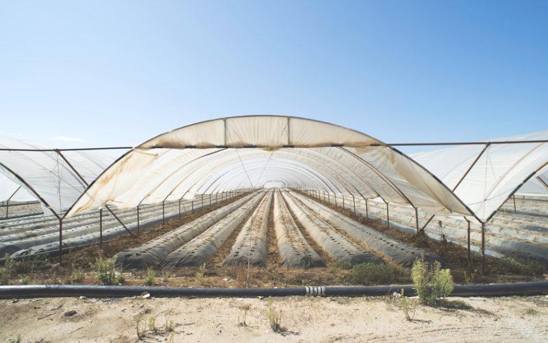 Systemy szklarni i tuneli foliowych – dobór osłony do gatunku i sposobu uprawy