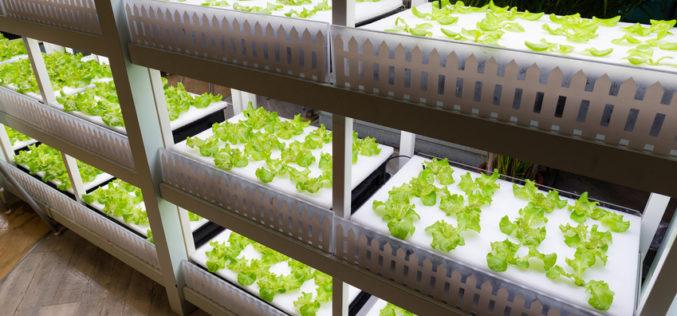 Farmy wertykalne – przyszłość upraw pod osłonami?