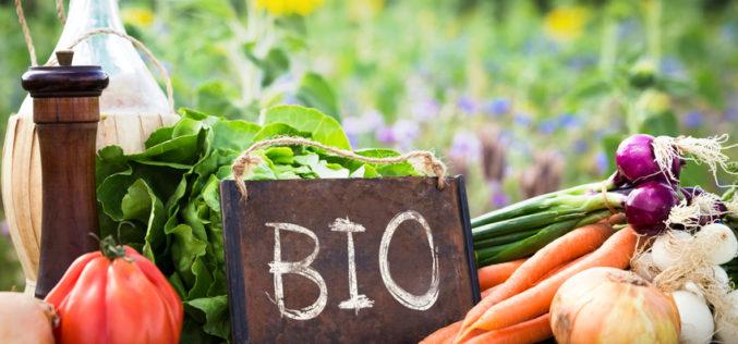 Gospodarstwo ekologiczne – od czego zacząć?