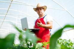 Robot szklarniowy – przyszłość upraw pod osłonami?