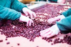 Przetwórstwo owoców i warzyw na poziomie gospodarstwa rolnego