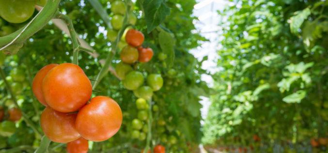 Nowatorskie rozwiązania w uprawie warzyw pod osłonami