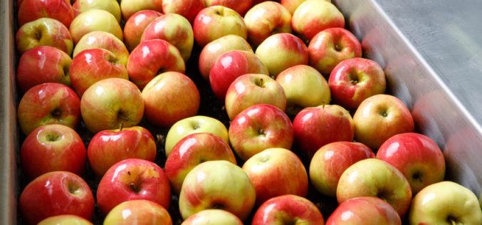 Polskie owoce w krajowym przemyśle przetwórczym – stan i perspektywy