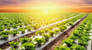 Ogrodnictwo jutra