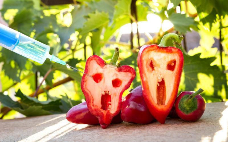 Sprzedaż nasion GMO prawnie zakazana