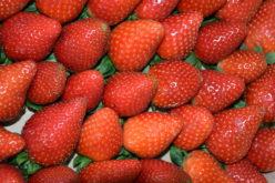Sprzedaż truskawek w nowoczesnym handlu
