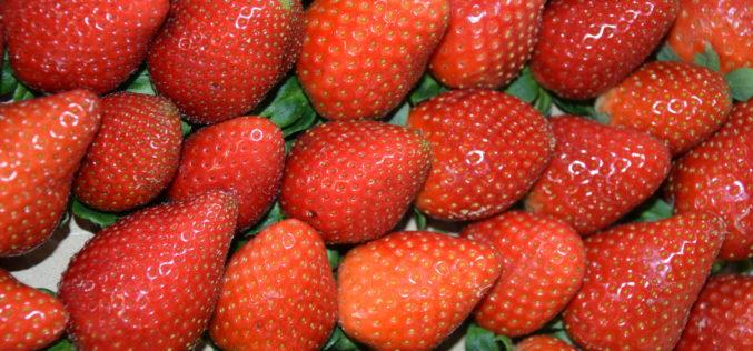 Ozonowanie – innowacyjna metoda przedłużania trwałości owoców jagodowych