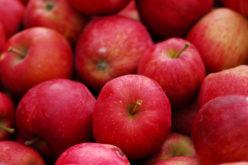 Eksport polskich owoców do krajów trzecich coraz większy