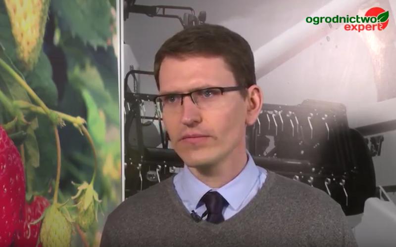 Niska podaż truskawek i agrestu zmorą przetwórców?