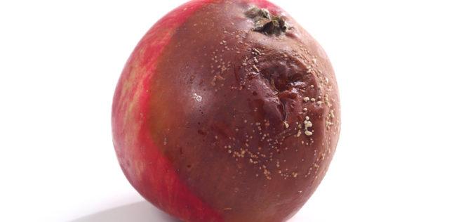 Jak zwalczać choroby przechowalnicze jabłek?
