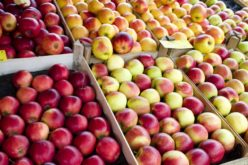 Polska największym unijnym eksporterem jabłek na rynki trzecie?