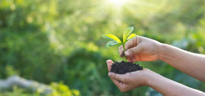 Ochrona prawna odmian roślin w Polsce oraz w krajach UE