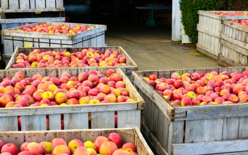 Ceny jabłek do przetwórstwa najwyższe od dekady?