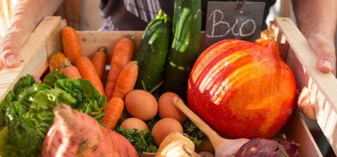 Produkcja żywności ekologicznej szansą dla małych gospodarstw?
