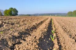 Po roku od wprowadzenia zmian w obrocie ziemią rolną – ceny wzrastają, ale zdecydowanie wolniej