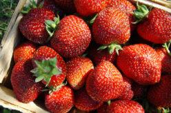 Wzrost dostaw truskawek deserowych przyniósł obniżki cen