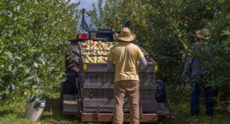 Nowy rodzaj umowy cywilnoprawnej dla pracowników sezonowych