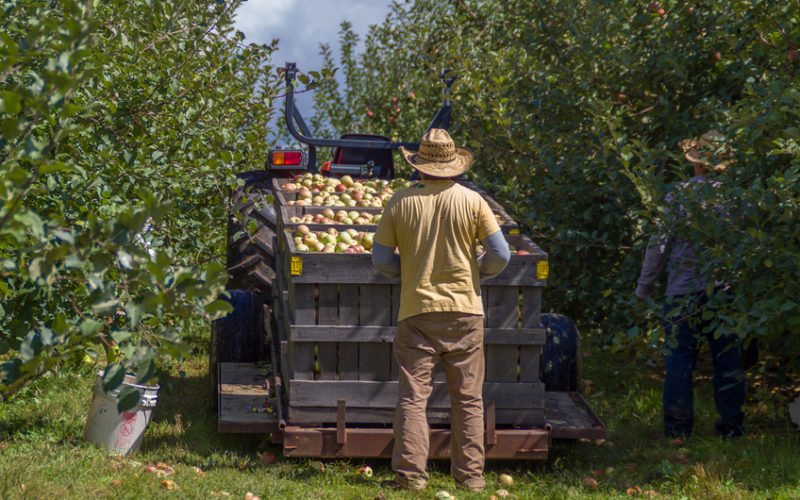Prace nad dyrektywą o pracownikach sezonowych trwają