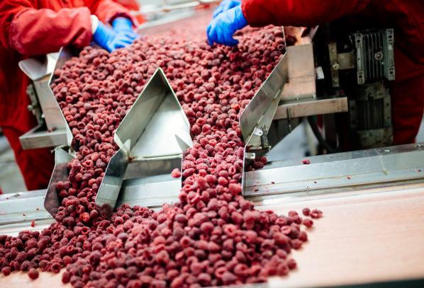 Mało surowca do przetwórstwa? Zakłady zawalczą o dostawce ceną?