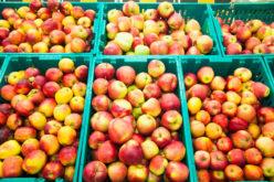 Rosną ceny jabłek do przetwórstwa