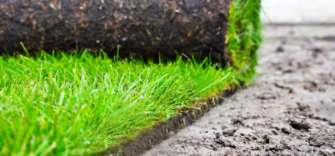 Polscy ogrodnicy europejskim liderem w uprawie trawy z rolki?