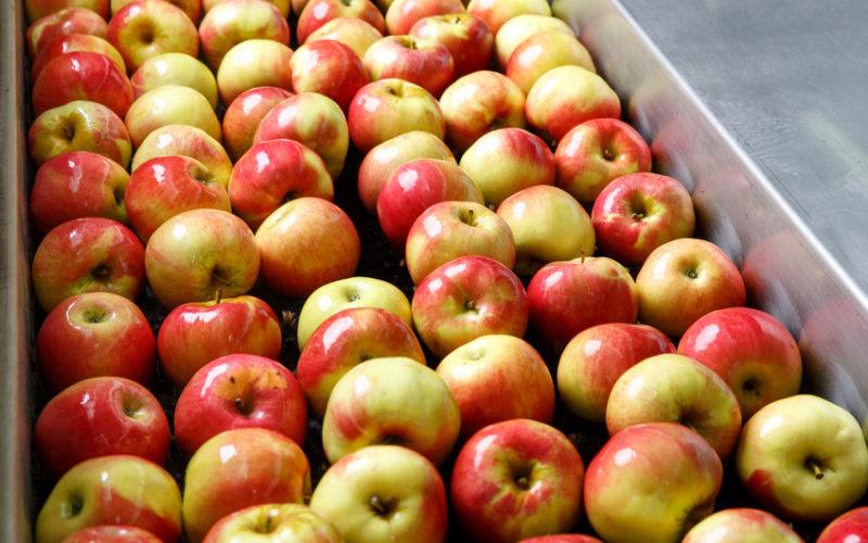 Jakie są perspektywy eksportu przetworów owocowych z Polski?