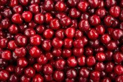Ceny wiśni i porzeczki czerwonej idą w górę
