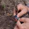Metody rozmnażania roślin sadowniczych