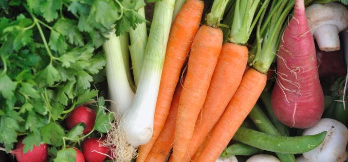 Rozpoczynają się dostawy warzyw do zakładów przetwórczych